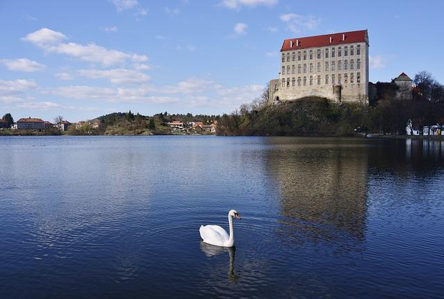 labuť, jezero, dům