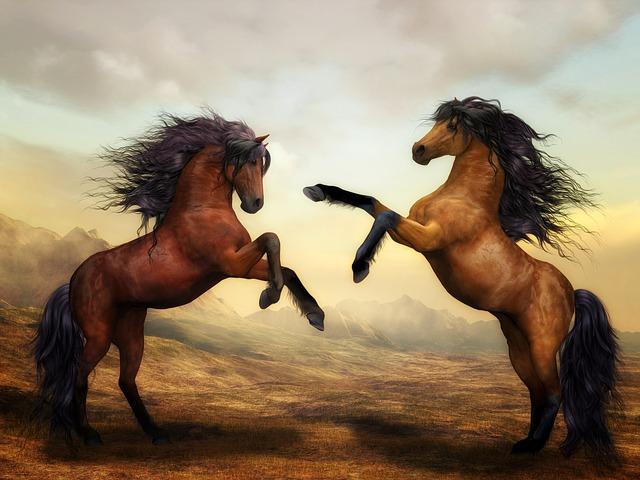 dva koně na zadních