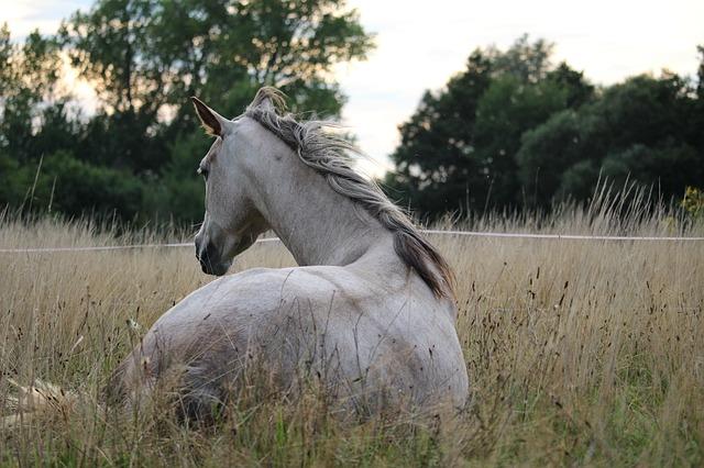 bílý kůň v ohradě