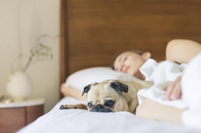 vám ani vašemu mazlíčkovi se nebude chtít vstávat